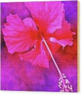 Colorful Cosmic Flower-hibiscus Wood Print
