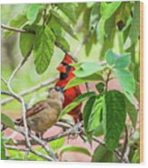 Colorful Couple Wood Print