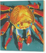 Colorful Crab II Wood Print by Stephen Anderson