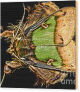 Colorful Cryptic Moth Wood Print