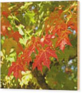 Colorful Fall Leaves Red Nature Landscape Baslee Troutman Wood Print
