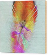 Colorful Feather Art Wood Print