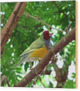 Colorful Finch Wood Print