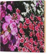 Colorful Flowers. Wood Print
