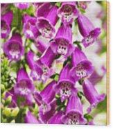 Colorful Foxglove Flowers Wood Print