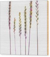 Colorful Grasses  Wood Print