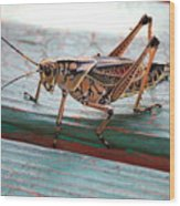 Colorful Grasshopper Wood Print
