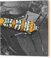 Colorful Insect - Ornate Bella Moth Wood Print