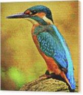 Colorful Kingfisher Wood Print
