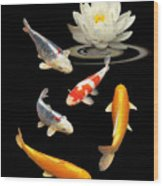 Colorful Koi With Water Lily Wood Print