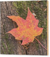 Colorful Leaf Wood Print