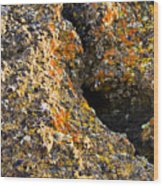 Colorful Lichens Wood Print