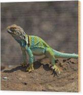 Colorful Lizard Wood Print