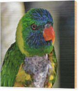 Colorful Lorikeet Wood Print