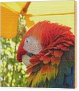 Colorful Macaw-1 Wood Print