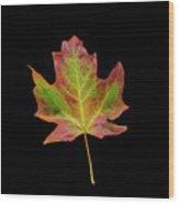 Colorful Maple Leaf Wood Print