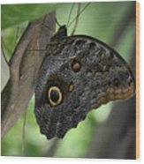 Colorful Markings On A Blue Morpho Butterfly On A Tree Trunk Wood Print