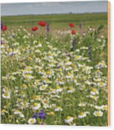 Colorful Meadow With Wild Flowers Wood Print