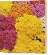 Colorful Mum Flowers Fine Art Abstract Photo Wood Print