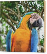 Colorful Nature Wood Print