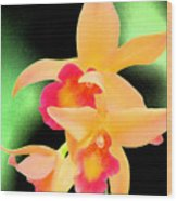 Colorful Orchid Wood Print