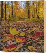Colorful Path Wood Print