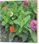 Colorful Pink And Orange Flowers In Green Leaves Bush In The Garden. Wood Print