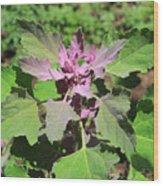 Colorful Plants Wood Print