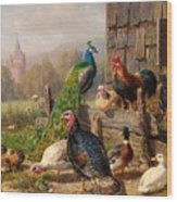 Colorful Poultry Wood Print