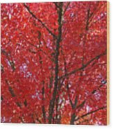 Colorful Red Orange Fall Tree Leaves Art Prints Autumn Wood Print