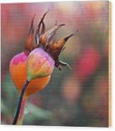 Colorful Rose Hips Wood Print