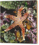 Colorful Seastar Laying On Cean Reef Wood Print by James Forte