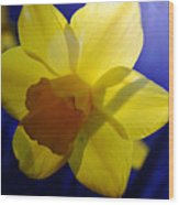 Colorful Spring Floral Wood Print