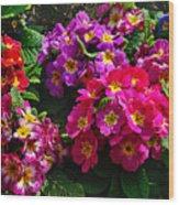 Colorful Spring Primrose By Kaye Menner Wood Print