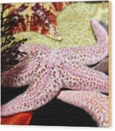 Colorful Starfish Wood Print