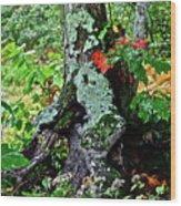 Colorful Stump Wood Print