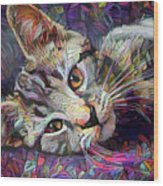 Colorful Tabby Kitten Wood Print