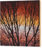 Colorful Tree Branches Wood Print