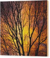 Colorful Tree Silhouettes Wood Print