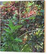 Colorful Tropical Plants Wood Print