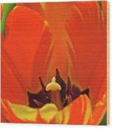 Colorful Tulip Wood Print