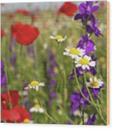 Colorful Wild Flowers Nature Spring Scene Wood Print