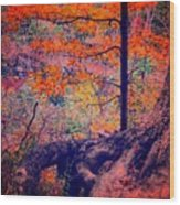 Colors In Nature  Wood Print