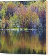 Colors Of Autumn In May Wood Print