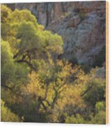 Colors Of Autumn In The Sonoran  Wood Print