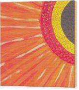 Colors Of Daisy Wood Print