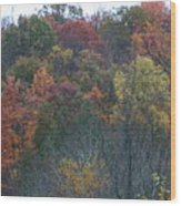 Color's Of Fall Wood Print