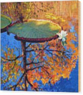 Colors Of Fall On The Lily Pond Wood Print
