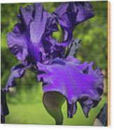 Colors Of Nature Wood Print