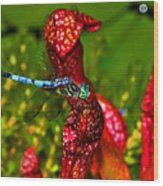 Colors Of Nature - Profile Of A Dragonfly 003 Wood Print